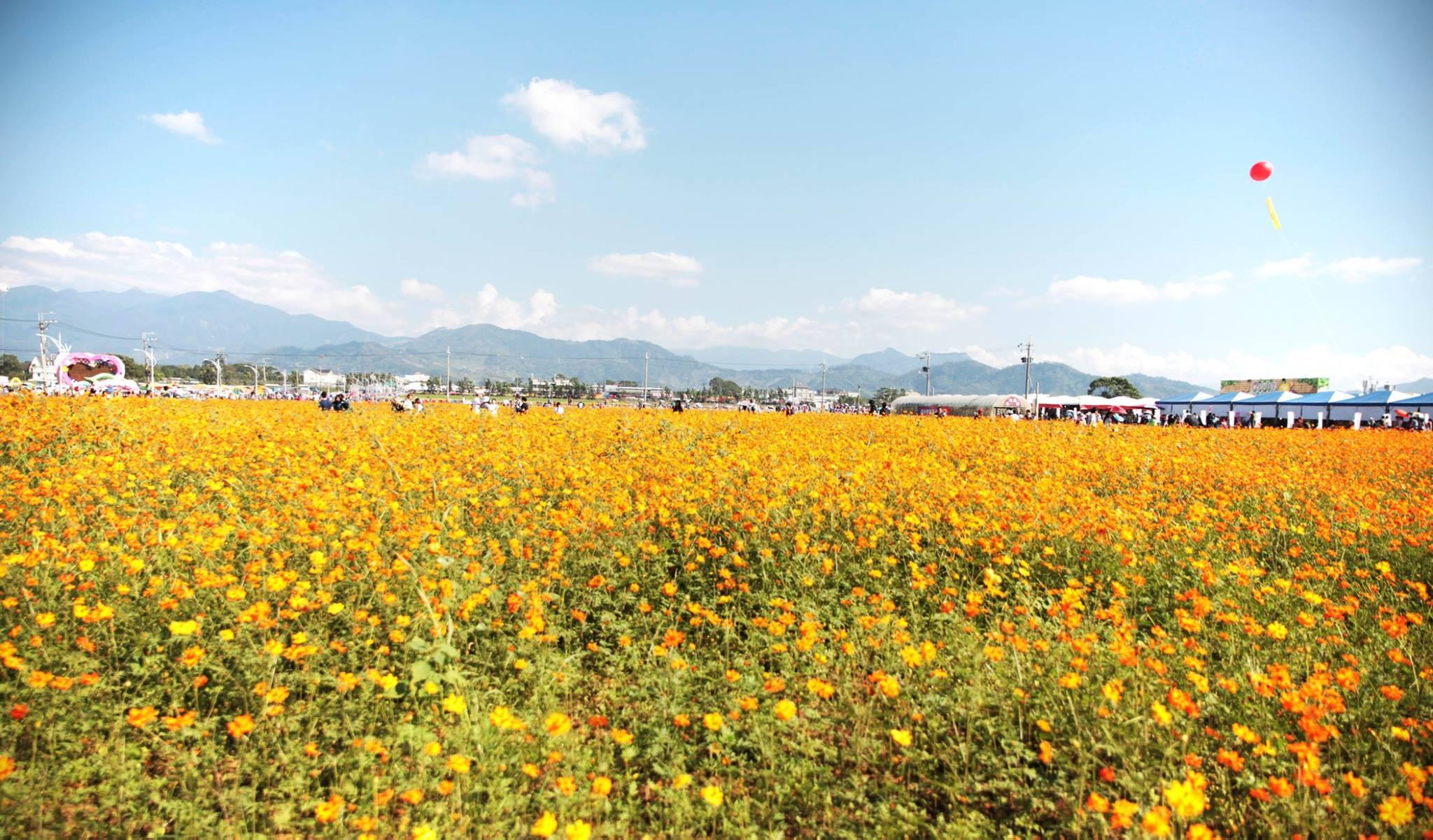 台灣 台中|人擠人也想去 美得猖狂的新社花海及周邊