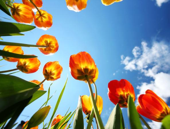 台灣 桃園| 桃園也可以很好玩  賞花祕境桃源仙谷