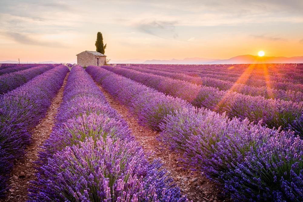 全球 景點|美到令人窒息~花季到國外賞花去!